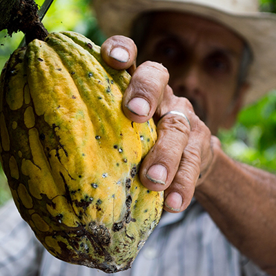 Nachernteprozess von Kakaobohnen: Herstellung des Rohstoffes für Schokolade in den Ursprungsländern